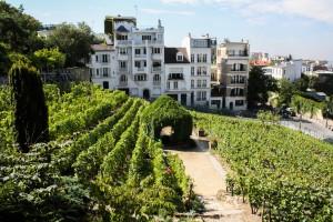 Sacré-Coeur - Vigne de Montmartre